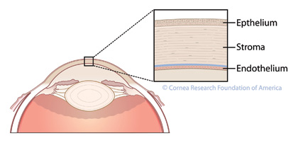 Corneal Cross-Section
